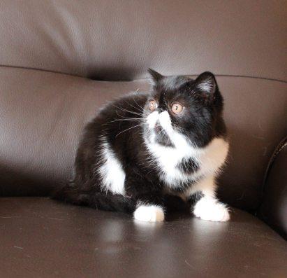 LORIEN'CATS MELUSINE