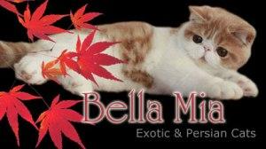 banner-bellamia