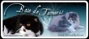 BAIE DE TAMARIS